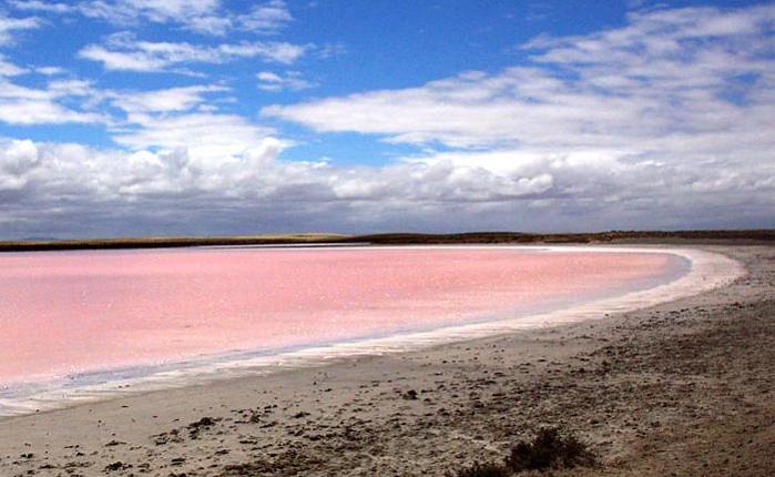 Ще раз про цілюще Лемурійське рожеве озеро Херсонщини