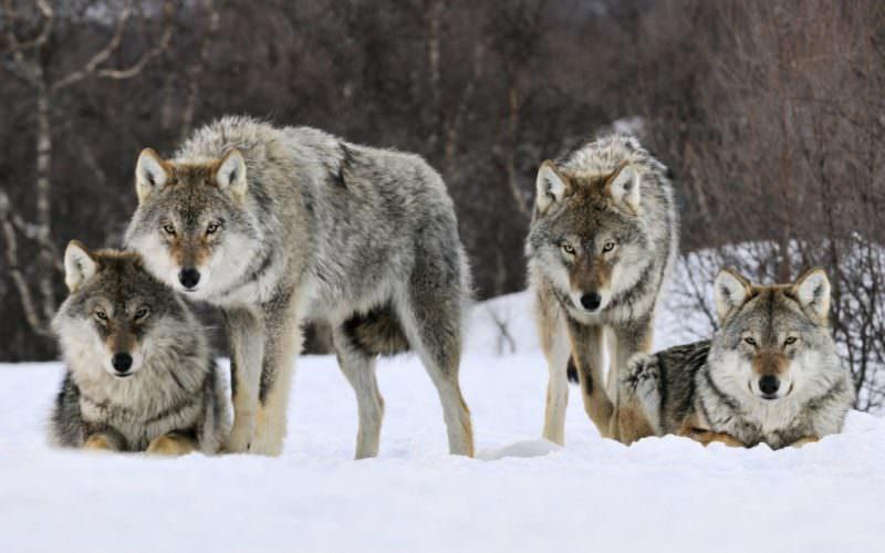 Фото вовки работа новый город для девушки